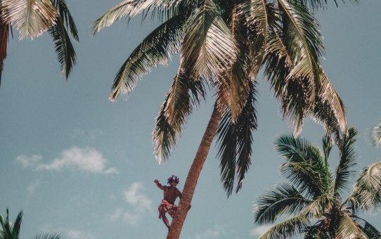 Lär dig allt om kokosnötter på Robinson Crusoe Island