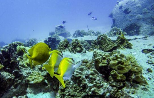 Diving @ Twins & Junkyard