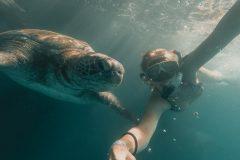 Snorkla med gigantiska Galapagos sköldpaddor på El Ñuro Beach