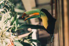 Jaguar Rescue Center – ett måste att besöka i Puerto Viejo