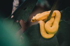 Se vilda djur där regnskogen möter stränderna i Cahuita National Park
