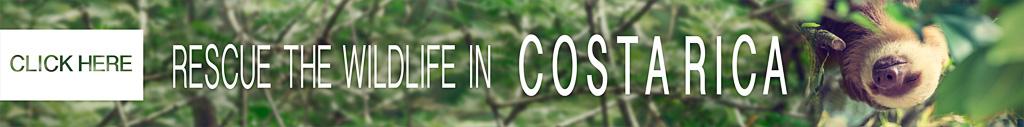Rescue the wildlife in Costa Rica