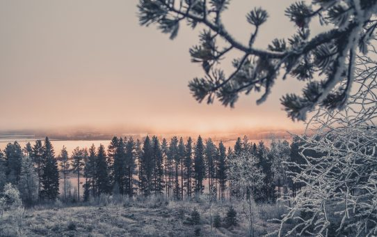 Krispiga dagar i Tavelsjö