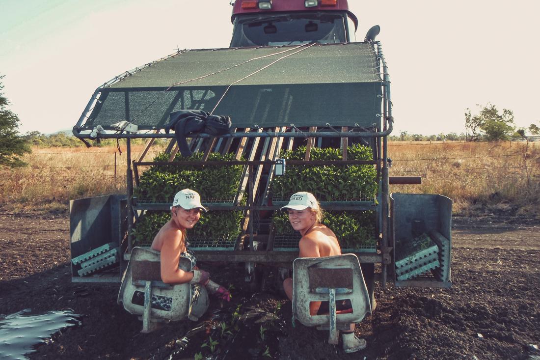 Work & holiday i Australien: så här gör du för att få jobb på farm